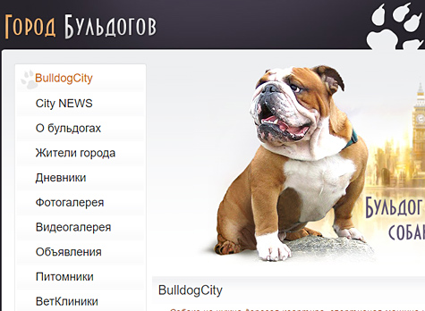 "Social network for dogs owners ""Bulldog City"""
